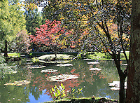 Stock photo: a pond in the Gibbs garden of Georgia USA reflecting fall trees.