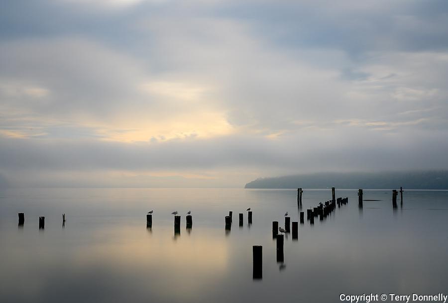 Vashon Island, Washington:<br /> Dawn, fog on Tramp Harbor and the East Passage. Salish Sea