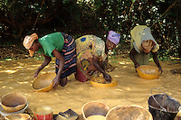 Tortiya, Ivory Coast (Cote d'Ivoire).   Women Using Calabashes to Sift for Diamonds in a Small Streambed.