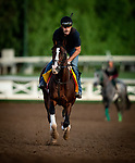 OCT 24: Breeders' Cup Classic entrant War of Will, trained by Mark E. Casse, gallops at Santa Anita Park in Arcadia, California on Oct 24, 2019. Evers/Eclipse Sportswire/Breeders' Cup