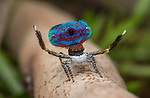 Intricate detailing of tiny peacock spiders on fingertips by Jurgen Otto
