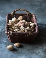 Europe,France, Normandie, Basse-Normandie, 50, Manche ,Pirou : Praires  // Europe, France, Normandy ,Basse-Normandie, Pirou: Warty venus, clams - Stylisme : Valérie LHOMME