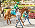 OCT 04, 2020 : Editor at Large in the Grade 2 Miss Grillo Stakes, for 2 year old fillies, on the inner turf at Belmont Park, Elmont, NY.  Sue Kawczynski/Eclipse Sportswire/CSM