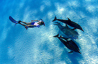 This freediver is swimming with Atlantic Bottlenose Dolphin, Tursiops truncatus, and Atlantic Spotted Dolphin,  Stenella plagiodon.  It is unusual for these species to intermix.  The Bahamas Bank.