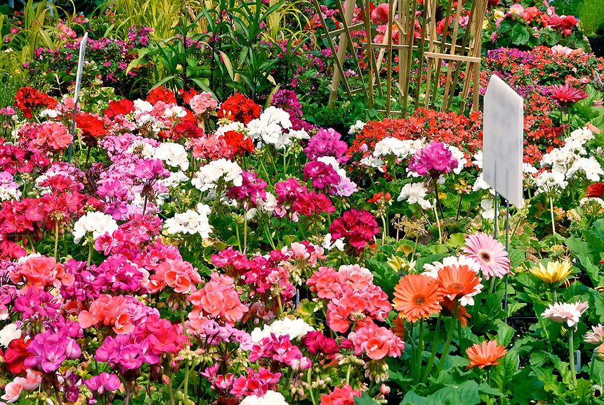 Selection of flowers at a nursey.
