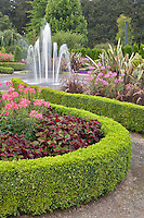 Hedges with fountain and Spider Flowers (Cleone spinosa). Oregon gardens