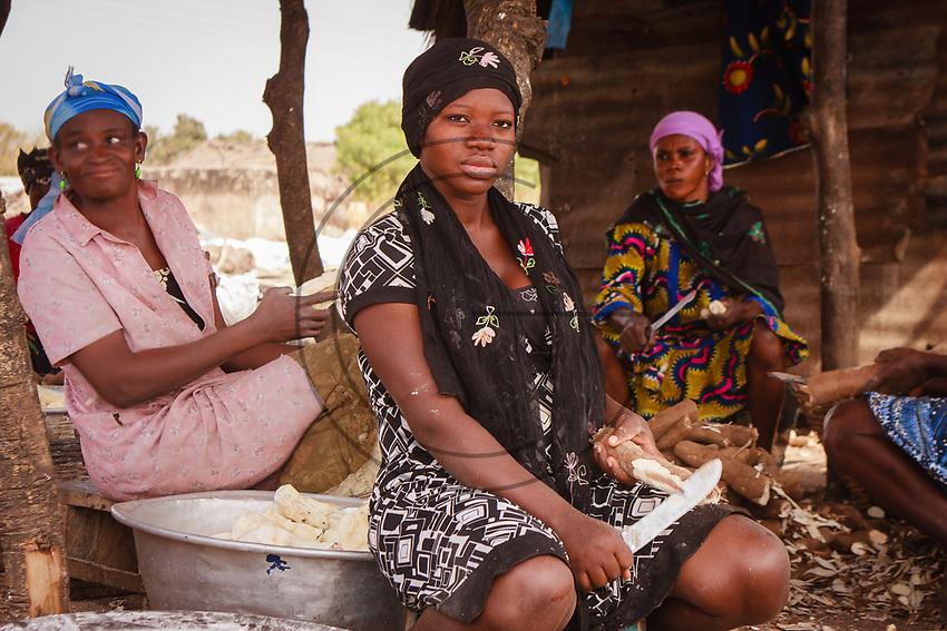 Africa, Ghana, women cut Cassava (Manihot esculenta), also called yuca, mogo, manioc, mandioca, tapioca and kamoteng kahoy to prepare its flour