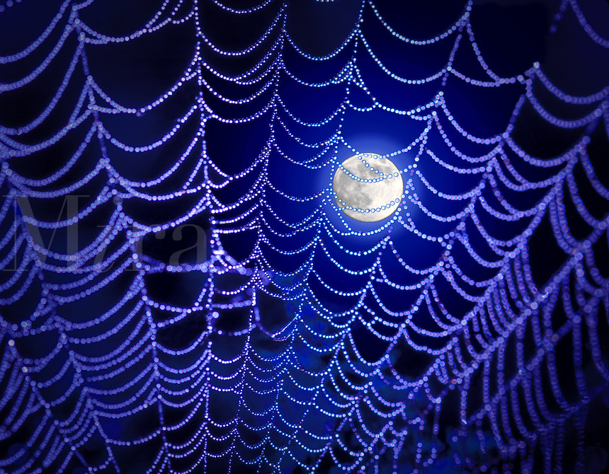 Photo Illustration of the moon and spider web.