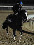 3 November 2010:  Get Stormy, trained by Thomas M. Bush and to be ridden by jockey Javier Castellano, works out for the 2010 Breeders Cup at Churchill Downs in Louisville, Kentucky.(Scott Serio/Eclipse Sportswire)