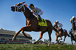 HALLANDALE FL - FEBRUARY 27: Lira # 4, with jockey Javier Castellano up races in The Canadian Turf Stakes at Gulfstream Park on February 27, 2016 in Hallandale, Florida.(Photo by Alex Evers/Eclipse Sportswire/Getty Images)