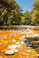 Tannin stained Oparara river in Oparara Valley near Karamea, Kahurangi National Park, Buller Region, West Coast, New Zealand