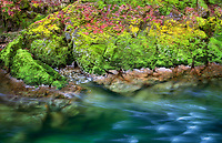 Quartzville Creek with moss and fall colored leaves. Quartzville Creek Wild and Scenic River. Oregon