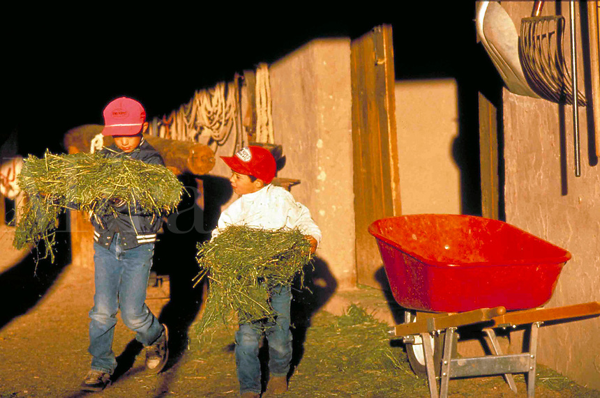 Brothers help with early morning chores on a ranch in Arizona.