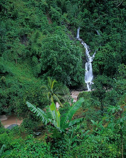 Waterfall, Banana Tree, Blue Mountains, Jamaica, Caribbean