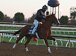Sally'S Curlin, trained by trainer Dale L. Romans, exercises in preparation for the Breeders' Cup Filly & Mare Sprint at Keeneland Racetrack in Lexington, Kentucky on November 3, 2020.