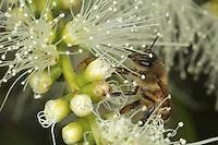 On the roads of perpetual honey flow - Sur les routes de la miellé perpetuelle