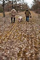 Europe/Europe/France/Midi-Pyrénées/46/Lot/Env de Lalbenque: Christian  Constant s'initie  au cavage  avec le cochon, (Recherche) des truffes sur le causse avec Mr Oulié, Trufficulteur