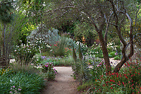 Entry path to Ruth Risdon Storer Garden of summer-dry drought tolerant mixed borders, University of California Davis Arboretum and Public Garden