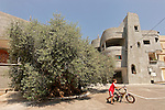 T-057 Olive Tree in Arabe'