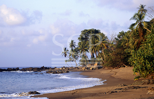 Marenco, Osa Peninsula, Costa Rica. Beach with palm trees coming down to the water's edge.