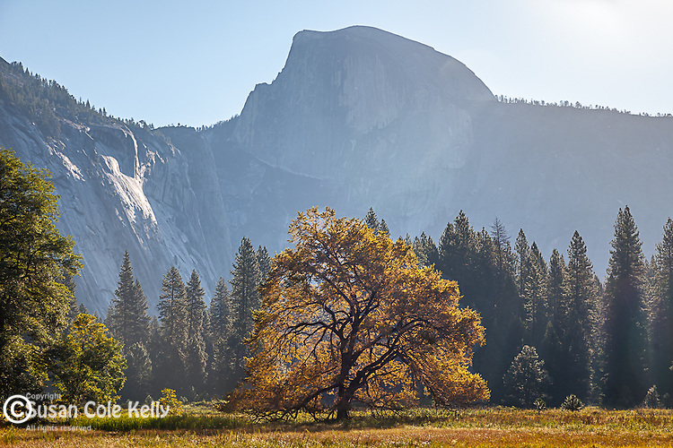 Half Dome in Yosemite National Park, CA, USA