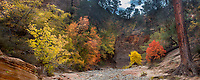 Fall colors have arrived on the Eastside of Zion National Park, Utah