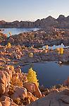 View of granite rocks and golden cottonwoods (Populus fremontii) during autumn at Watson Lake, Arizona, USA