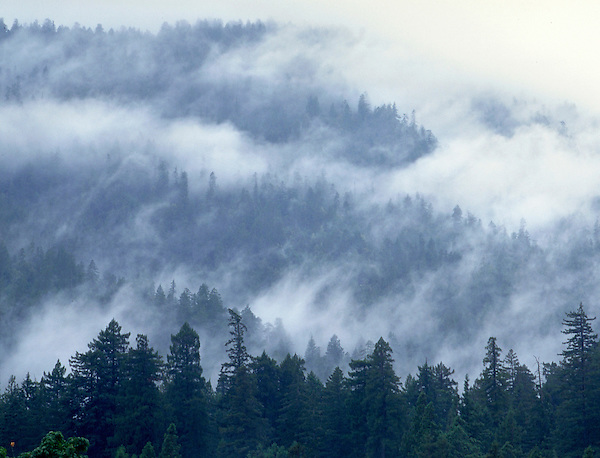 Fog in the Cascade Mountains, Oregon. John offers private photo tours in Washington and throughout Colorado. Year-round.