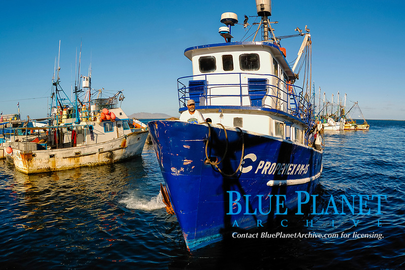 commercial fishing, Sardine fishing boats, Mexico, Pacific Ocean
