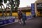 OCT 27: Breeders' Cup Mile entrant Got Stormy, trained by Mark E. Casse, at Santa Anita Park in Arcadia, California on Oct 27, 2019. Evers/Eclipse Sportswire/Breeders' Cup