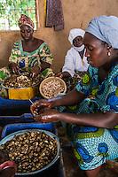 Women Working in Cashew Nut Processing Center, Group Dimbal Djabott, Mendy Kunda, North Bank Region, The Gambia