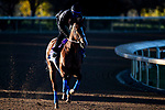 November 4, 2020: Gamine, trained by trainer Bob Baffert, exercises in preparation for the Breeders' Cup Filly & Mare Sprint at Keeneland Racetrack in Lexington, Kentucky on November 4, 2020. Jon Durr/Eclipse Sportswire/Breeders Cup