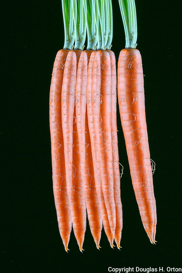 Fine Art image of single carrot spinning.  Multiple exposure.