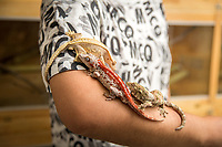 Wang Ke, 30, stands in his breeding farm with a Red Striped Gargoyle Gecko (Rhacodactylus auriculatus), a Pin Striped Crested Gecko and a Mossy New Caledonian gecko (Mniarogekko chahoua). These geckos are only found in the forests of New Caledonia in the South Pacific with many listed as vulnerable species, due to pressures from human activities including logging, wildfires and forest clearance and wildlife trafficking.