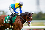 TOYOAKE,JAPAN-MAR 20: Rooks Nest,ridden by Hideaki Miyuki, is post parading before the Falcon Stakes at Chukyo Racecourse on March 20,2021 in Toyoake,Aichi,Japan. Kaz Ishida/Eclipse Sportswire/CSM