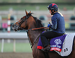 I'm A Dreamer, trained by David Simcock, exercises in preparation for the upcoming Breeders Cup at Santa Anita Park on October 30, 2012.