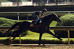 LOUISVILLE, KY -MAY 28: McCraken, ridden by Brian Hernadez Jr., breezes at Churchill Downs, Louisville, Kentucky, in preparation for the G1 Metropolitan Mile June 9 in New York. (Photo by Mary M. Meek/Eclipse Sportswire/Getty Images)