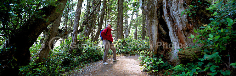 Middle Aged Hiker hiking on Trail along Pacific West Coast of Vancouver Island, near Ucluelet, BC, British Columbia, Canada (Model Released)