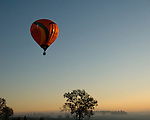 A balloon lifts over fields and pastures in early morning at the annual Winchester Balloon Festival.  Long Branch Farm, Winchester, Virginia, USA.  © RickCollier.com.
