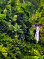Akaka Falls. Akaka Falls State Park. Hawaii, The Big Island
