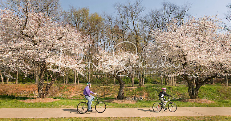A family rides bikes among the flower trees in Freedom Park in Charlotte, NC