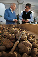 Europe/Europe/France/Midi-Pyrénées/46/Lot/Cahors: Christian Constant  avec Pierre-Jean Pebeyre négociant en truffes, choisit ses Truffes du Périgord ,Tuber Melanoporum, à la Maison Pebeyre [Non destiné à un usage publicitaire - Not intended for an advertising use]