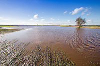 Wheat crop flooded after heavy rainfall - Lincolnshire, February