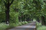 Europa, DEU, Deutschland, Nordrhein Westfalen, NRW, Rheinland, Niederrhein, Krefeld, Typische Baumallee, Baeume, Kastanien, Kastanienbaeume, Weg, Strasse, Verkehrsstrasse, Kategorien und Themen, Natur, Umwelt, Landschaft, Jahreszeiten, Stimmungen, Landschaftsfotografie, Landschaften, Landschaftsphoto, Landschaftsphotographie, Verkehr, Strassenverkehr, Auto, Automobile, Mobil, Kraftfahrzeug, KFZ, Strasse, Verkehrsmittel, Mobilitaet, Unterwegs......[Fuer die Nutzung gelten die jeweils gueltigen Allgemeinen Liefer-und Geschaeftsbedingungen. Nutzung nur gegen Verwendungsmeldung und Nachweis. Download der AGB unter http://www.image-box.com oder werden auf Anfrage zugesendet. Freigabe ist vorher erforderlich. Jede Nutzung des Fotos ist honorarpflichtig gemaess derzeit gueltiger MFM Liste - Kontakt, Uwe Schmid-Fotografie, Duisburg, Tel. (+49).2065.677997, ..archiv@image-box.com, www.image-box.com]