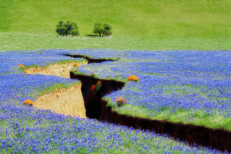 Deeply erroded stream with lupine and poppies. Bear Valley, Colusa County, California