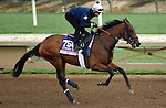 ARCADIA, CA - NOV 01: New Money Honey, owned by eFive Racing Thoroughbreds and trained by Chad C. Brown, exercises in preparation for the Breeders' Cup 14 Hands Winery Juvenile Fillies at Santa Anita Park on November 1, 2016 in Arcadia, California. (Photo by Scott Serio/Eclipse Sportswire/Breeders Cup)