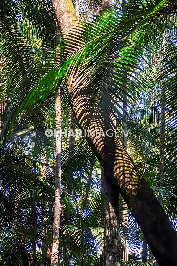 Bosque das Imbuias, Jardim Botânico, São Paulo. 2021. Foto Luíza Lucchetti