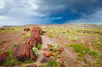 petrified logs in desert of badlands, Petrified Forest National Park, Arizona, USA