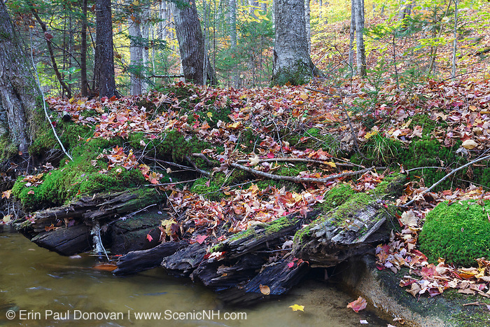Remnants of a siding, near Birch Island Brook, along the East Branch & Lincoln Railroad (1893 -1948) in Lincoln, New Hampshire.