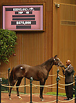 12 September 2010.  Hip #49 Empire Maker - Henderson Band colt, sold for $575,000 at the Keeneland Septembery Yearling Sale.  Consigned by Brereton C. Jones / Airdrie.